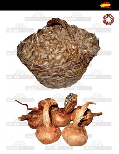 Saffron Bulbs 2kg Caliber A